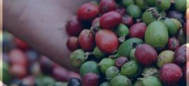 ICAP apoya al Consejo Agropecuario Centroamericano en concertación de agendas regionales de apoyo al sector cafetalero en la región SICA
